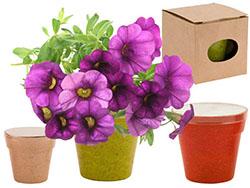Bloempot met 5-8 zaadjes voor een petunia